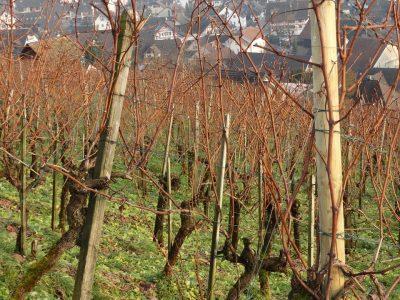 Zimski tretman voćnjaka i vinograda
