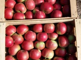 Jabuke sorte ajdared i crveni delišes