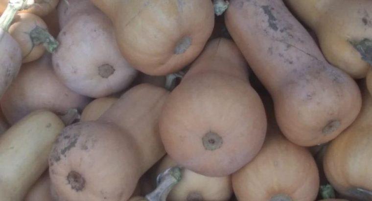 Muskatna tikvica i domaća pečenka (bela bundeva)