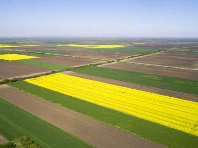 Cena poljoprivrednog zemljišta na prodaju – od čega zavisi?