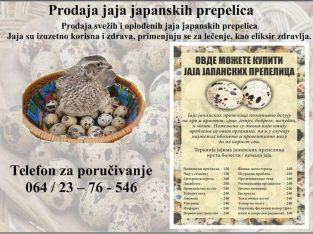 Prodaja jaja japanskih prepelica