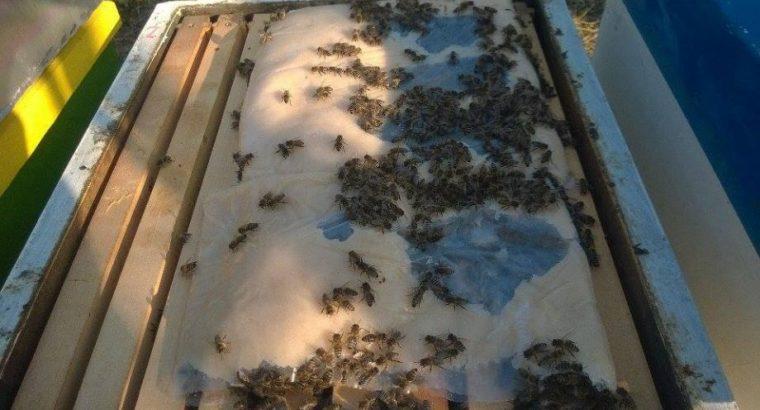 Odlična ponuda! Pogača za pčele