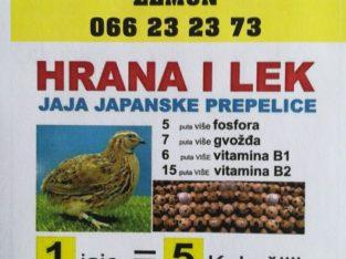 Jaja japanske prepelice!