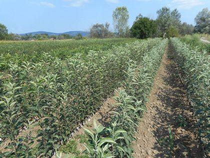 Rezervišite sadnice na vreme 30% popusta