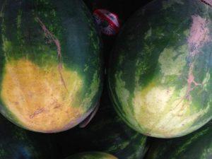 Beli trag na lubenici