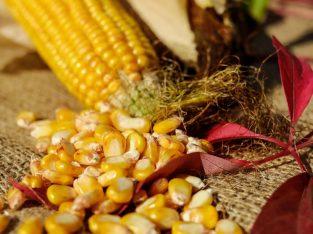 Na prodaju poljoprivredni proizvodi