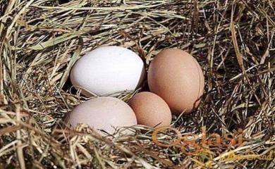Domaći rezanci Organska jaja