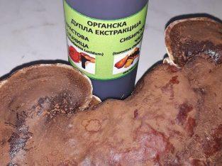 Tinktura Ganoderma lucidum-Sibirska čaga