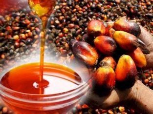 palmovo olje za kuhanje, biodizel in drugo uporabo