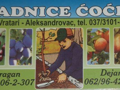 Prodaja voćnih sadnica – Rasadnik Ćoćić